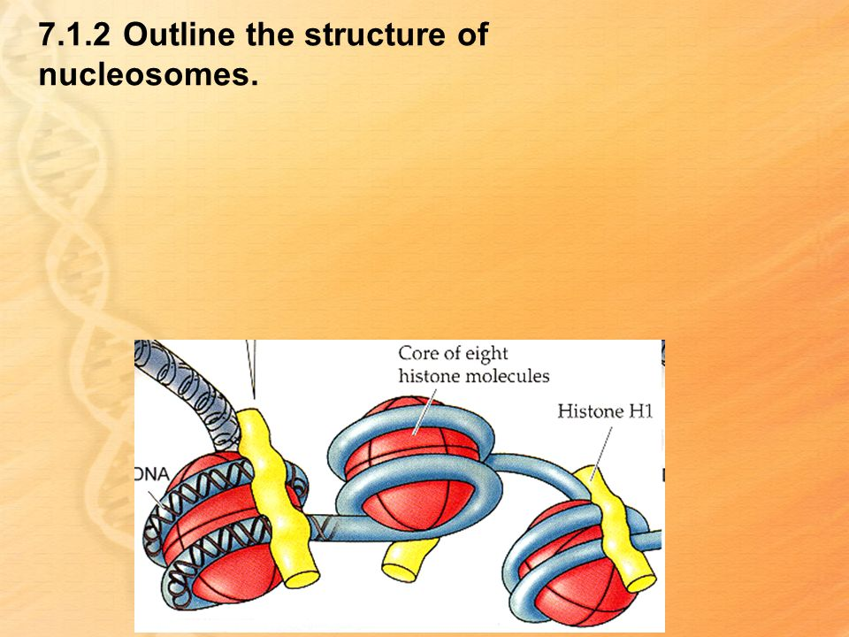 7.1.2 Outline the structure of nucleosomes.