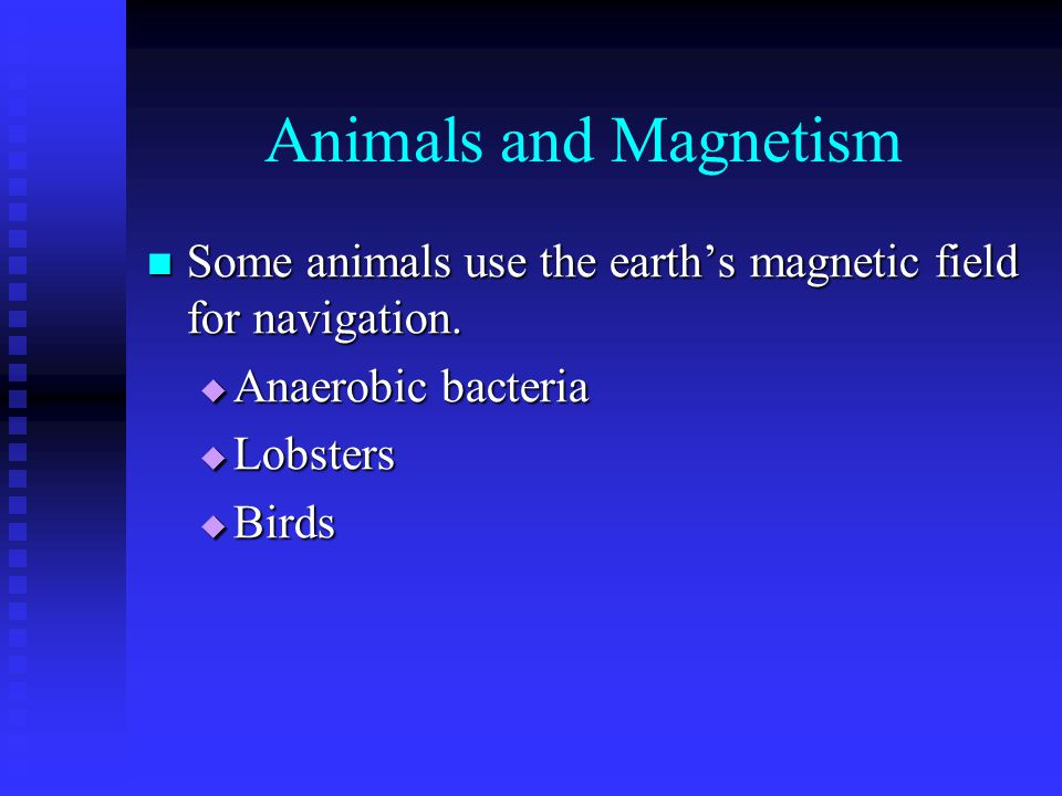Animals and Magnetism Some animals use the earth's magnetic field for navigation. Anaerobic bacteria.