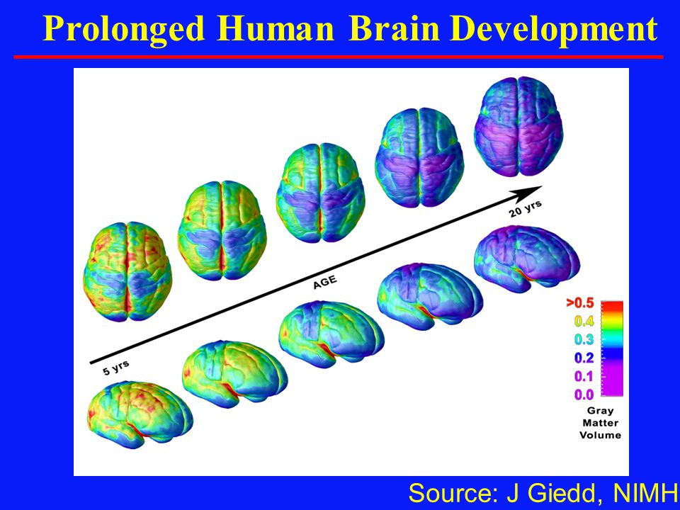 Prolonged Human Brain Development
