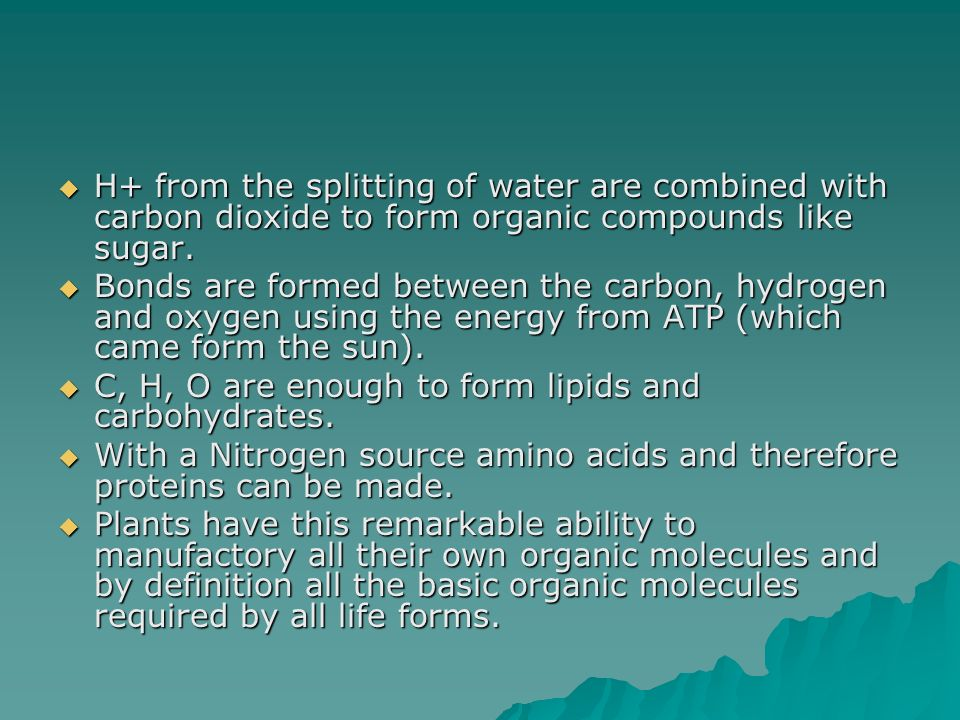 H+ from the splitting of water are combined with carbon dioxide to form organic compounds like sugar.