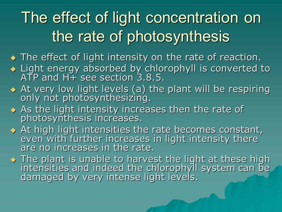 The effect of light concentration on the rate of photosynthesis