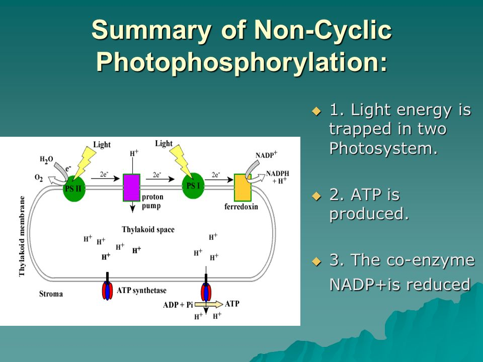Summary of Non-Cyclic Photophosphorylation: