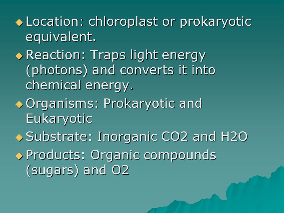 Location: chloroplast or prokaryotic equivalent.