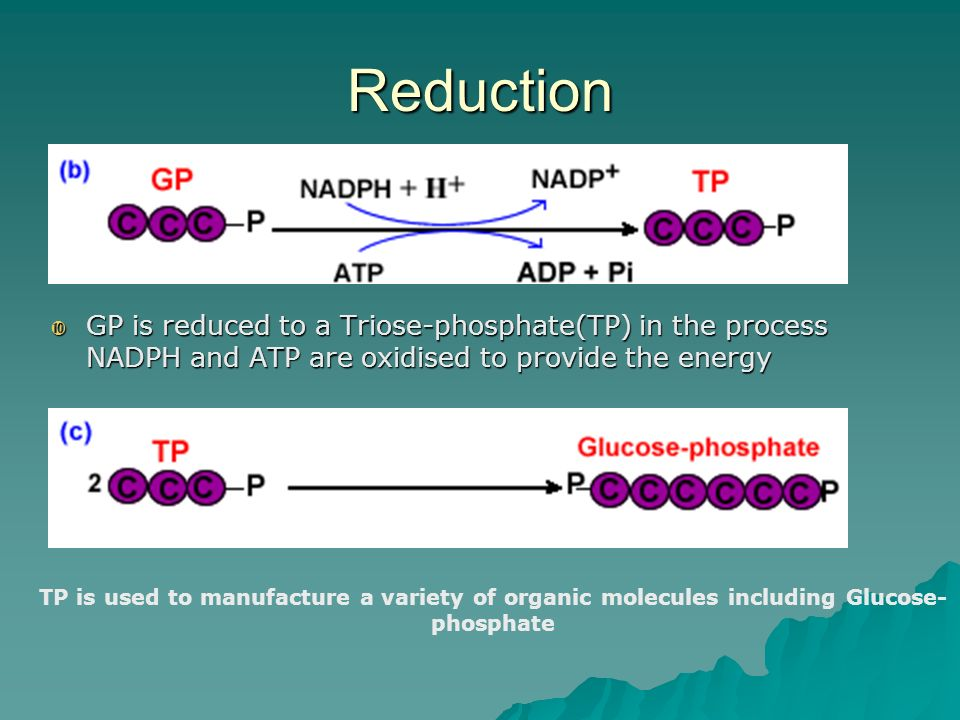 Reduction GP is reduced to a Triose-phosphate(TP) in the process NADPH and ATP are oxidised to provide the energy.