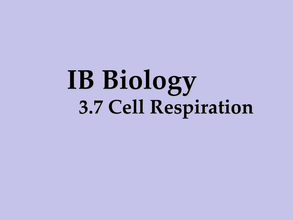 IB Biology 3.7 Cell Respiration