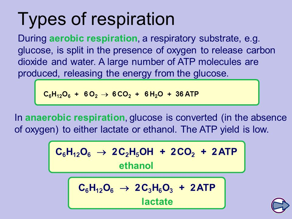 Boardworks A2 Biology Respiration. Types of respiration.