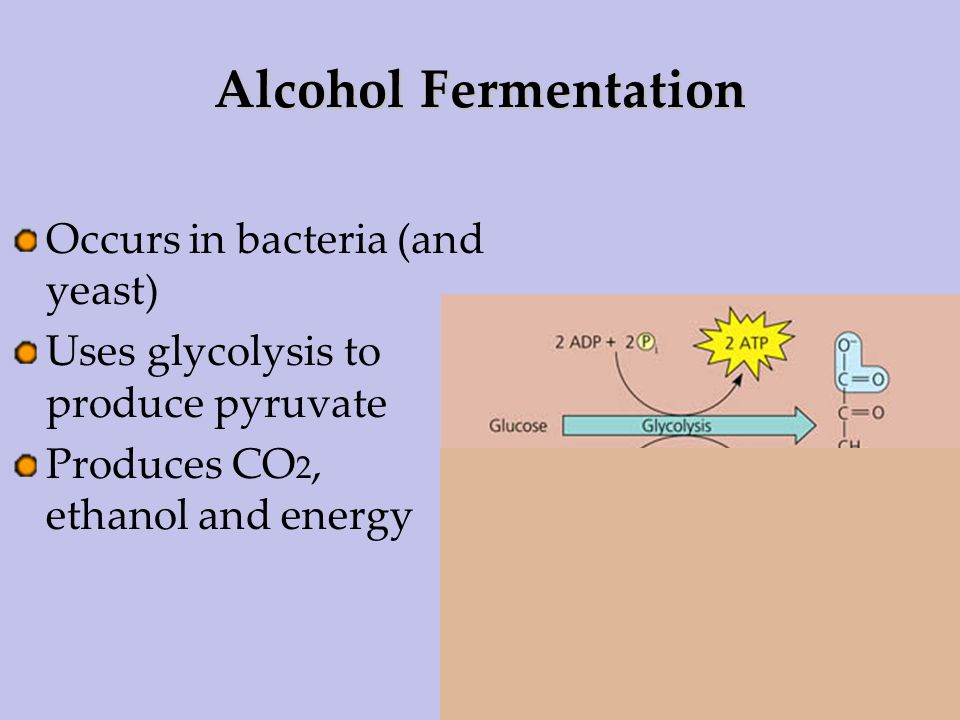 Alcohol Fermentation Occurs in bacteria (and yeast)