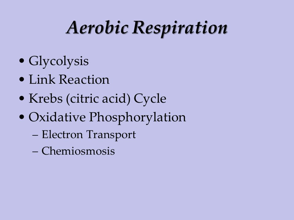 Aerobic Respiration Glycolysis Link Reaction Krebs (citric acid) Cycle