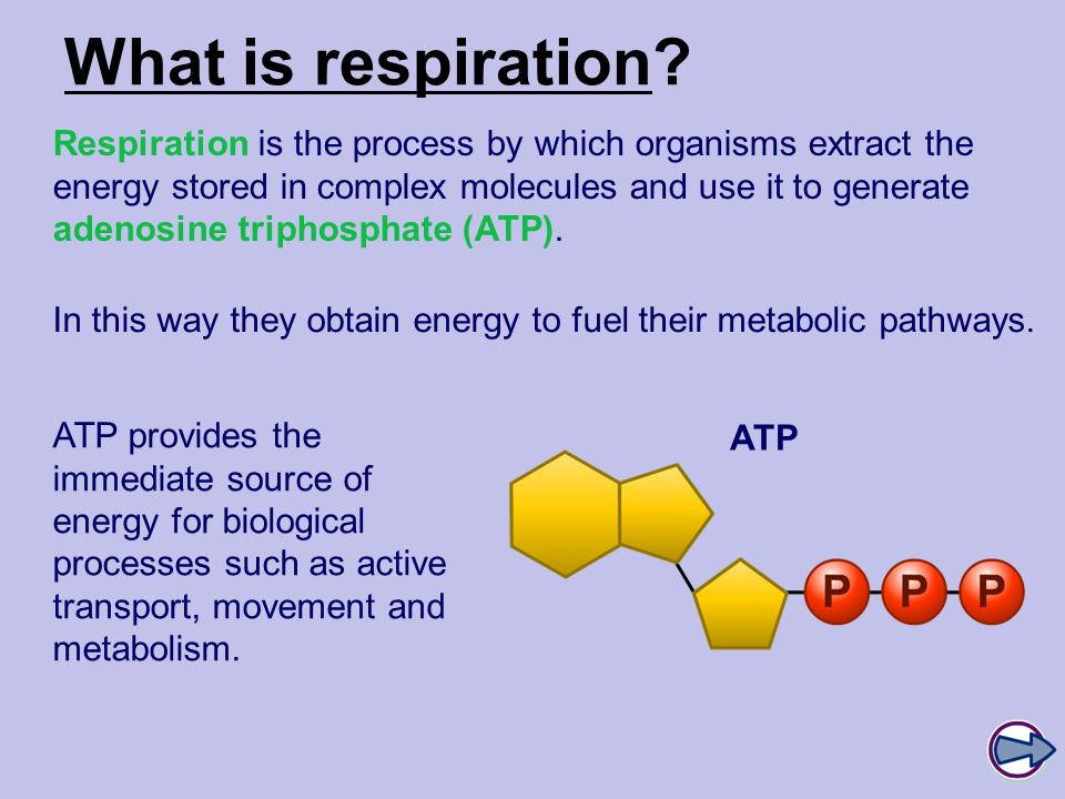 Boardworks A2 Biology Respiration. What is respiration