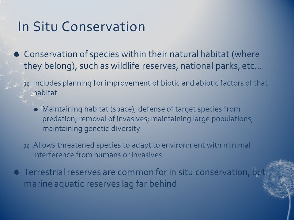 In Situ Conservation Conservation of species within their natural habitat (where they belong), such as wildlife reserves, national parks, etc…