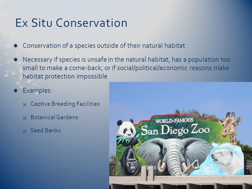 Ex Situ Conservation Conservation of a species outside of their natural habitat.