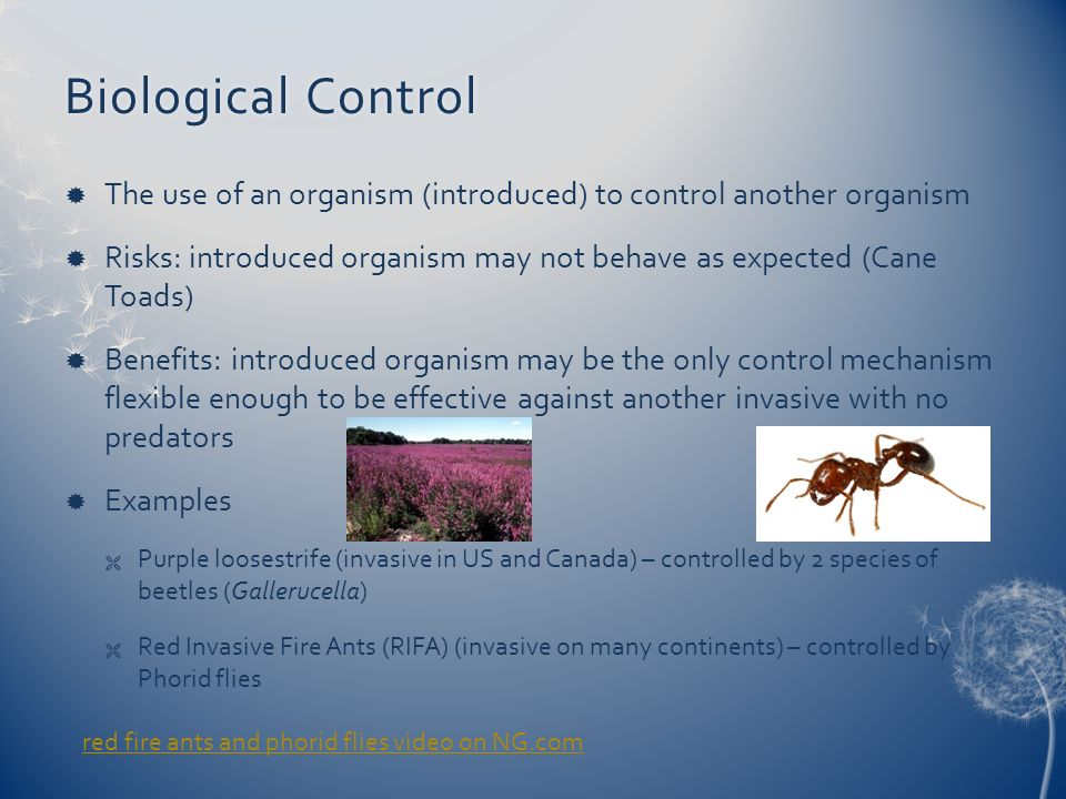 Biological Control The use of an organism (introduced) to control another organism.