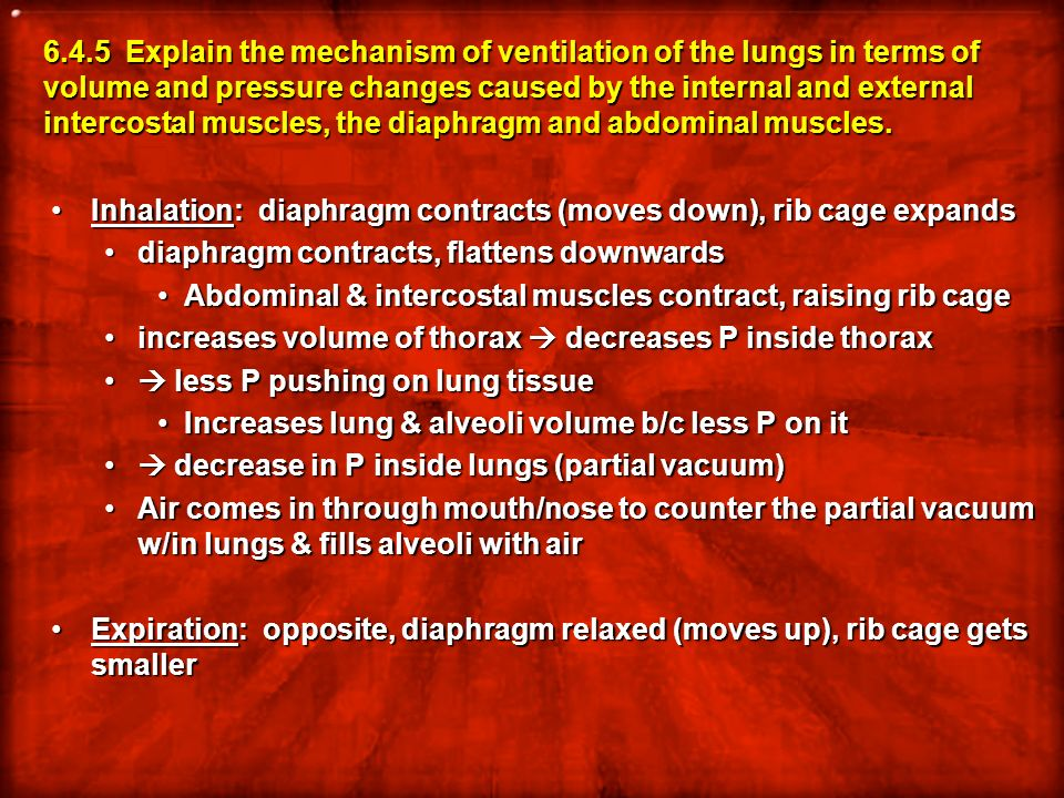 6.4.5 Explain the mechanism of ventilation of the lungs in terms of volume and pressure changes caused by the internal and external intercostal muscles, the diaphragm and abdominal muscles.