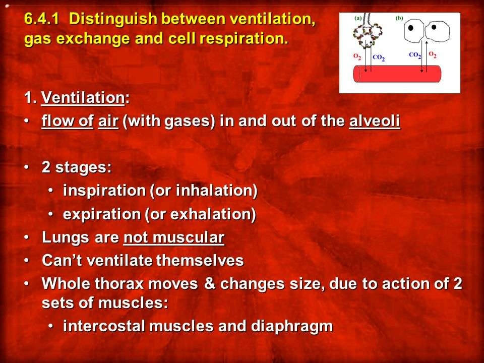 6.4.1 Distinguish between ventilation, gas exchange and cell respiration.