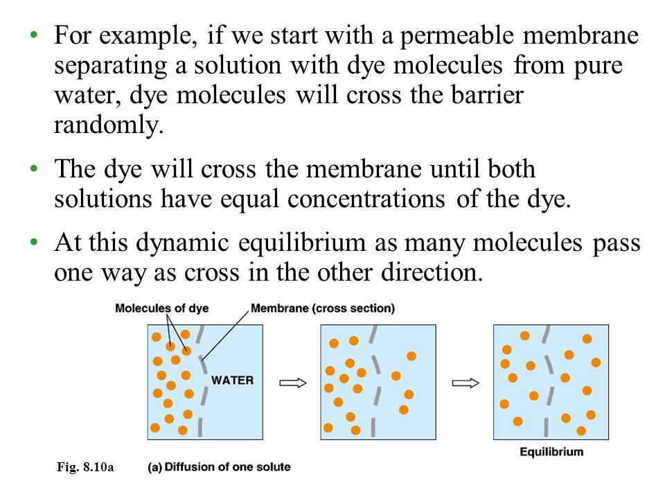 For example, if we start with a permeable membrane separating a solution with dye molecules from pure water, dye molecules will cross the barrier randomly.