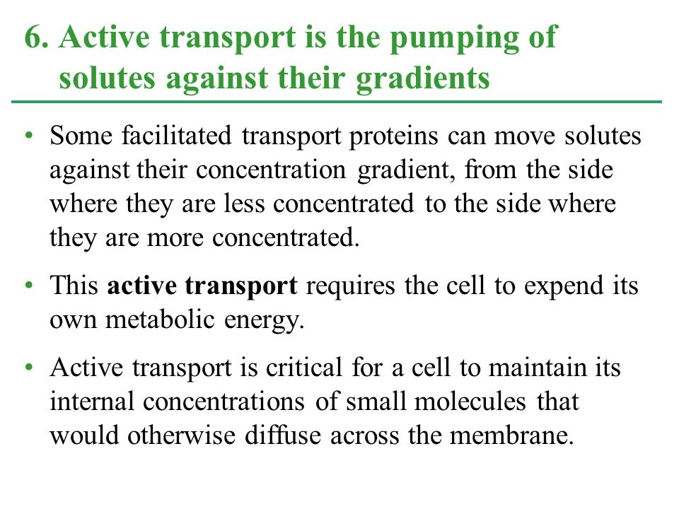 6. Active transport is the pumping of solutes against their gradients