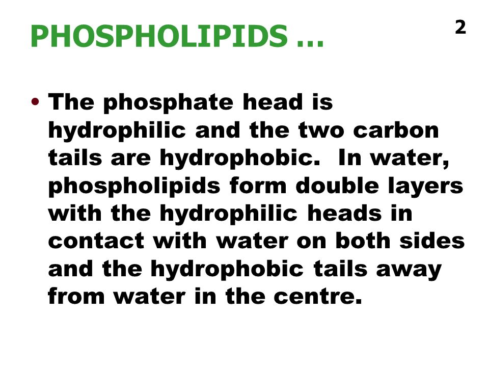 PHOSPHOLIPIDS … 2.