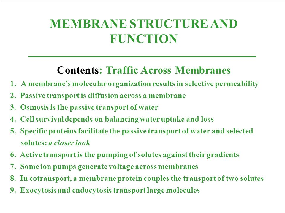 MEMBRANE STRUCTURE AND FUNCTION Contents: Traffic Across Membranes