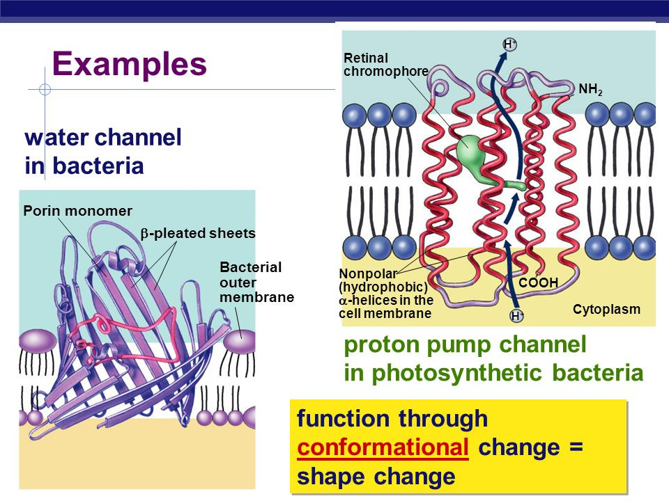 Examples water channel in bacteria