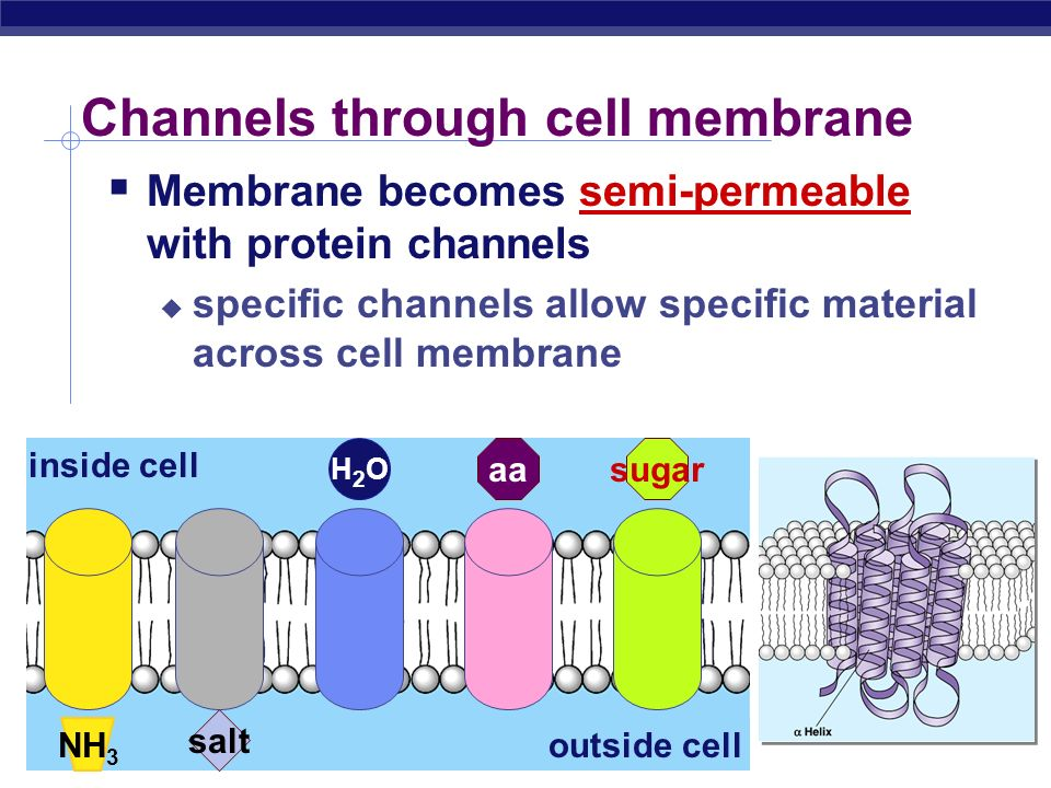 Channels through cell membrane