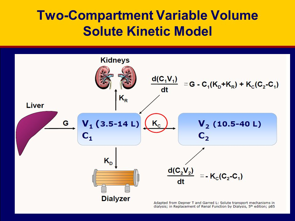 Two-Compartment Variable Volume Solute Kinetic Model