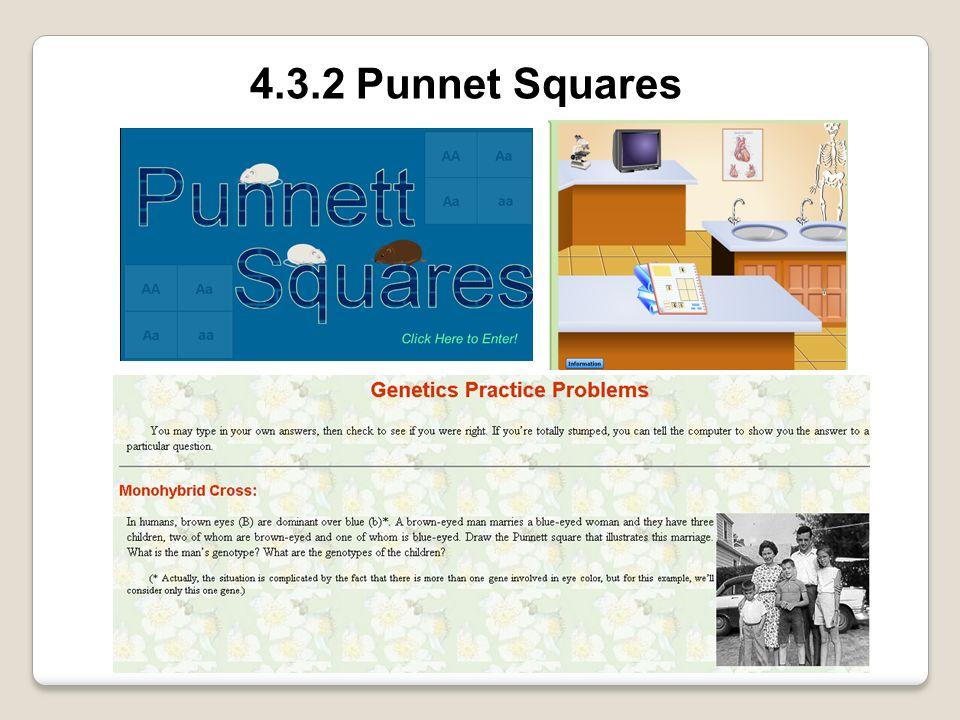 4.3.2 Punnet Squares