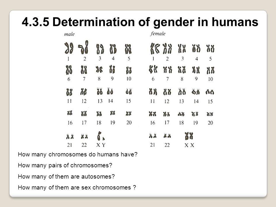 4.3.5 Determination of gender in humans