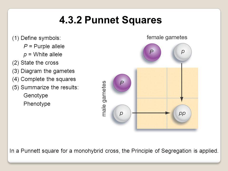 4.3.2 Punnet Squares (1) Define symbols: P = Purple allele