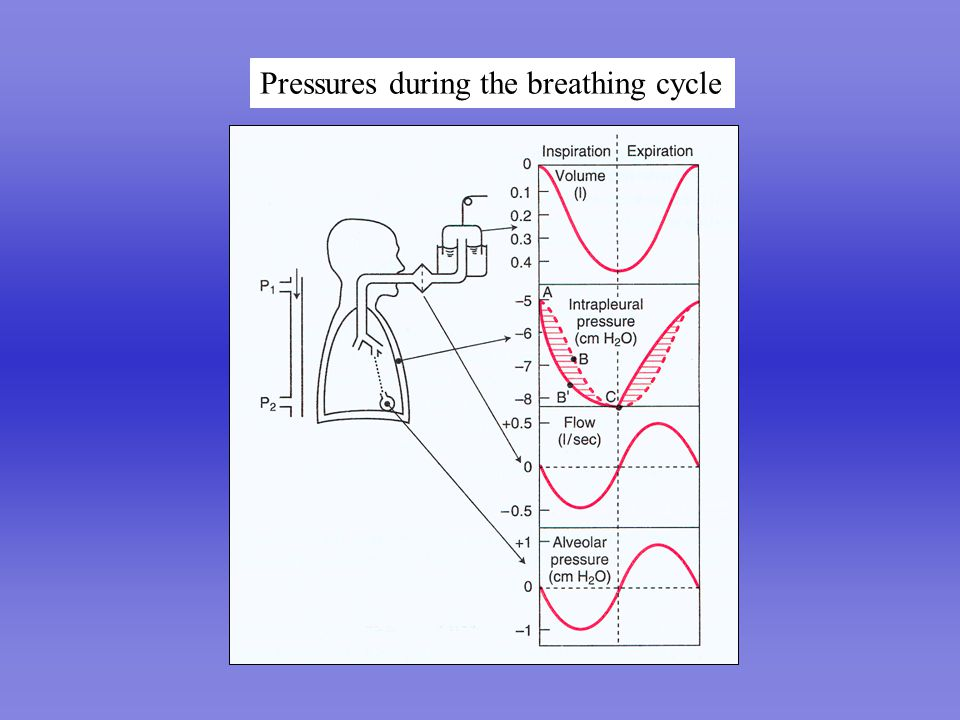 Pressures during the breathing cycle