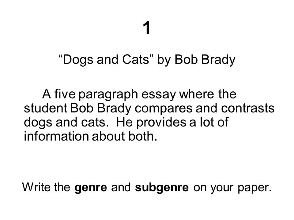 1 Dogs and Cats by Bob Brady