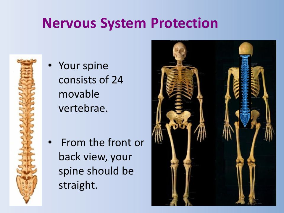 Nervous System Protection