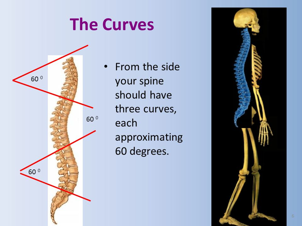 The Curves From the side your spine should have three curves, each approximating 60 degrees. 60 0