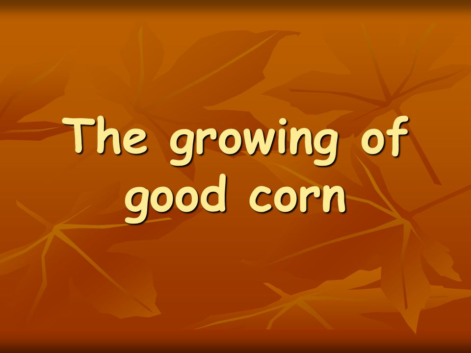 The growing of good corn
