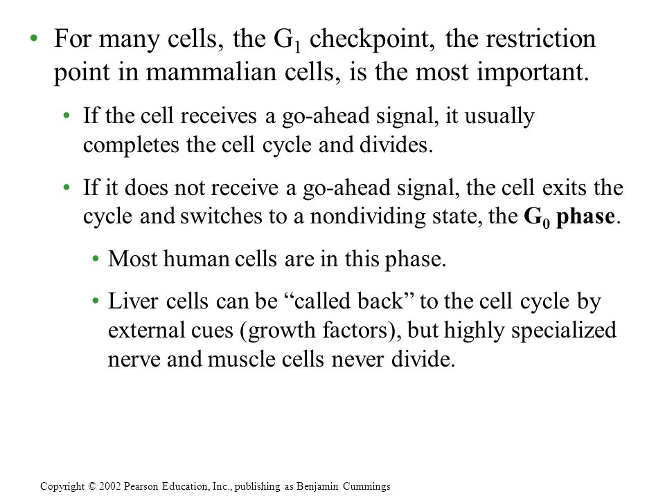 For many cells, the G1 checkpoint, the restriction point in mammalian cells, is the most important.