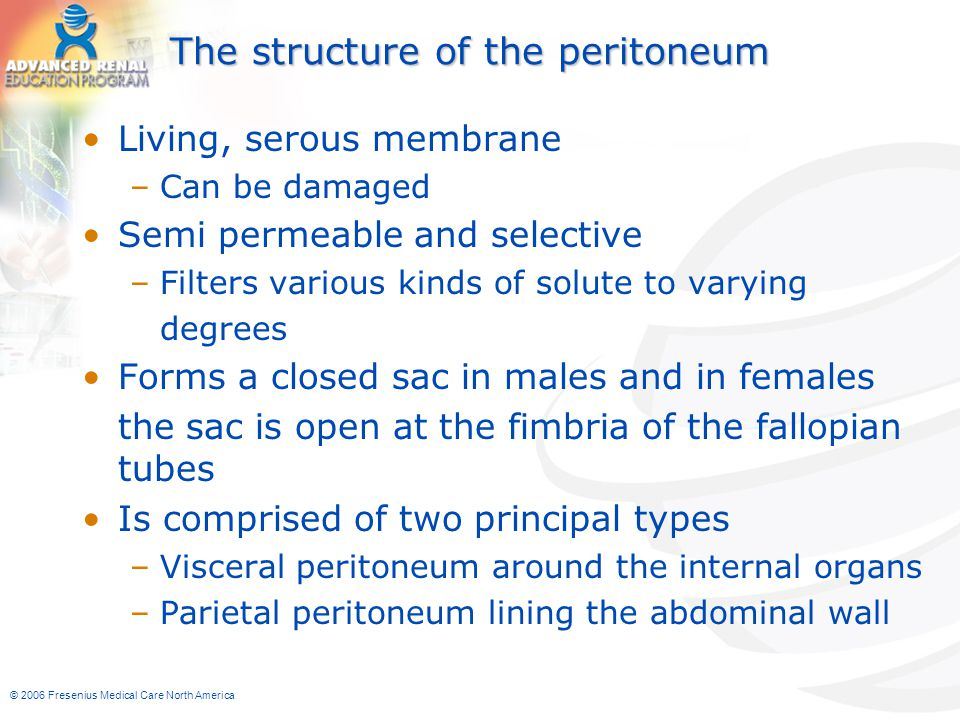 The structure of the peritoneum