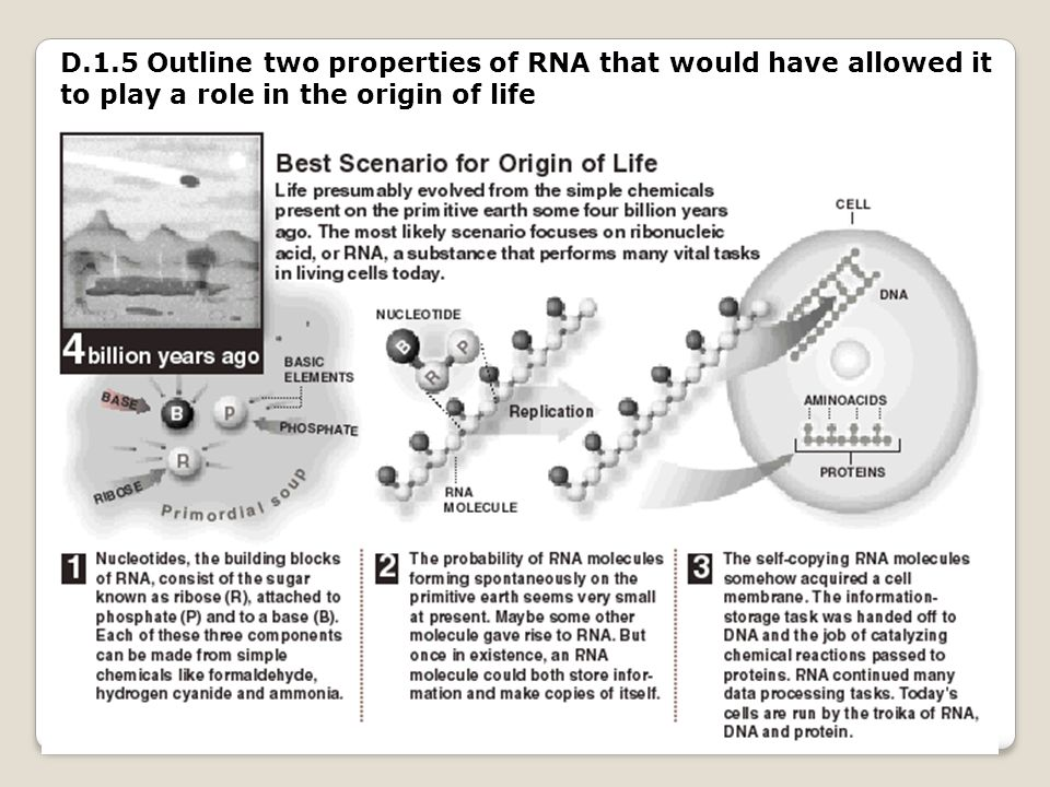 D.1.5 Outline two properties of RNA that would have allowed it to play a role in the origin of life