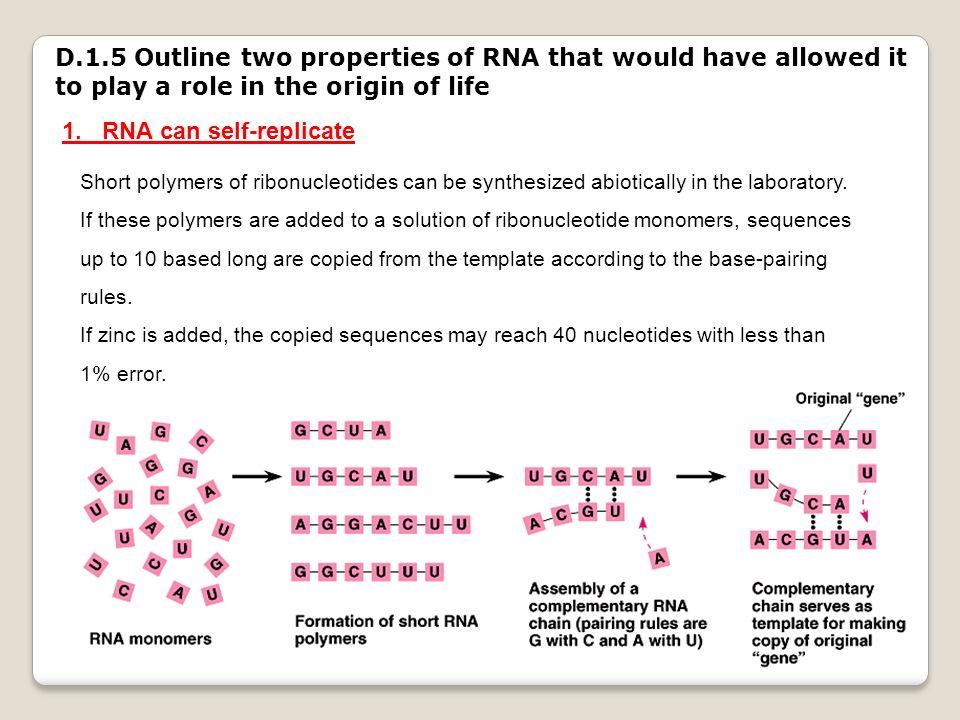 1. RNA can self-replicate