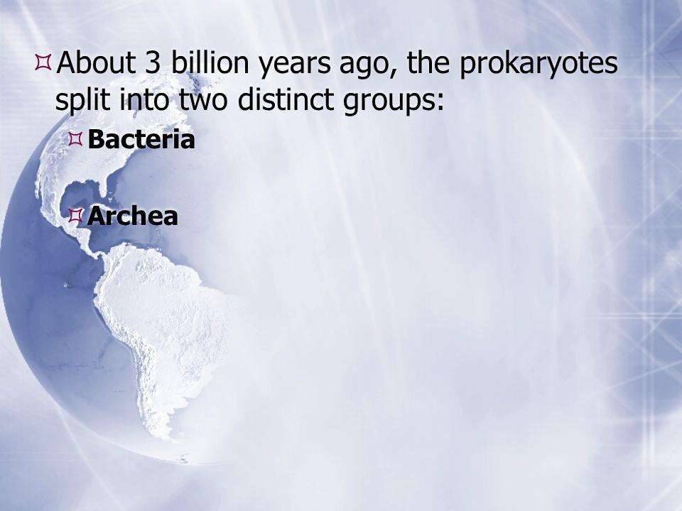 About 3 billion years ago, the prokaryotes split into two distinct groups: