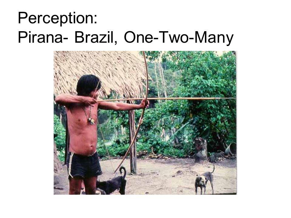 Perception: Pirana- Brazil, One-Two-Many