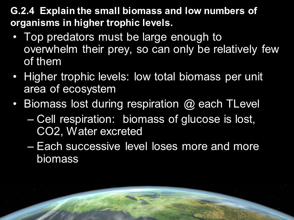 Higher trophic levels: low total biomass per unit area of ecosystem