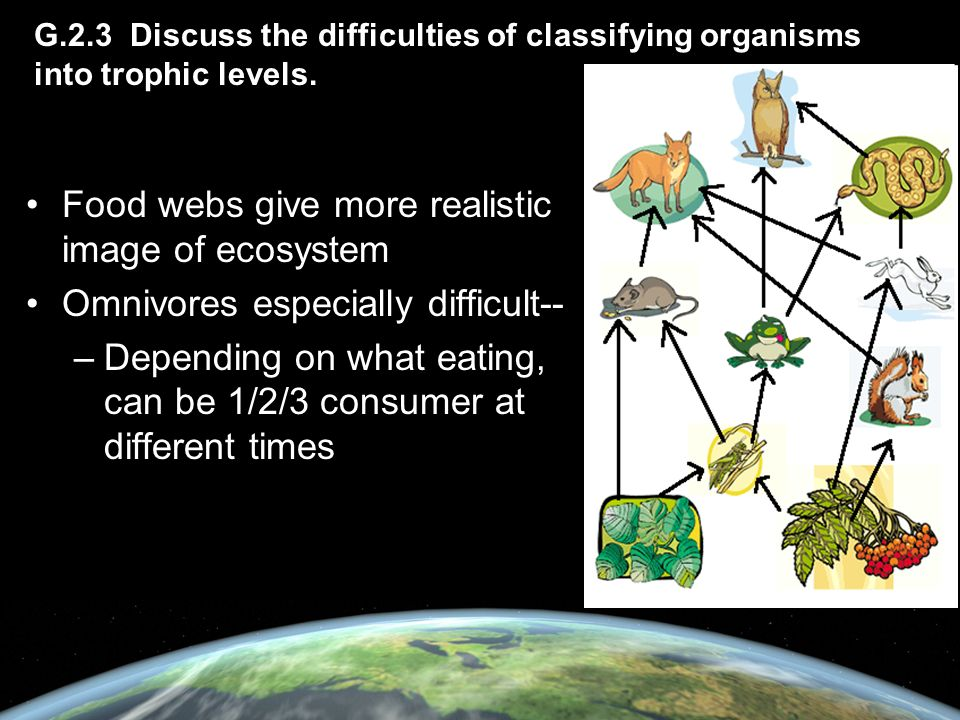 Food webs give more realistic image of ecosystem