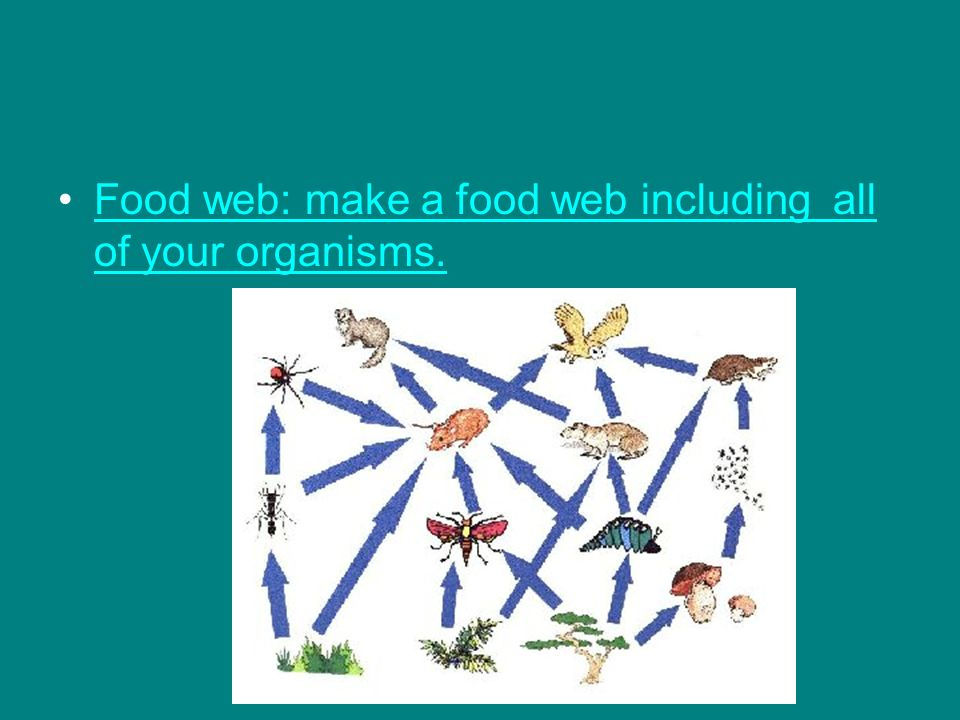 Food web: make a food web including all of your organisms.