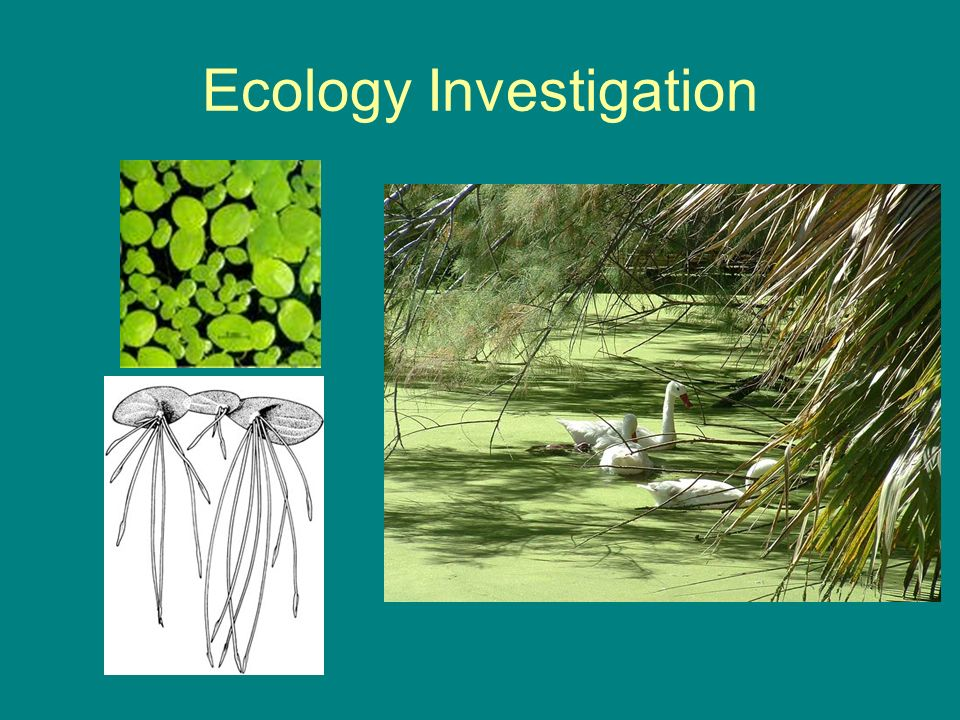 Ecology Investigation