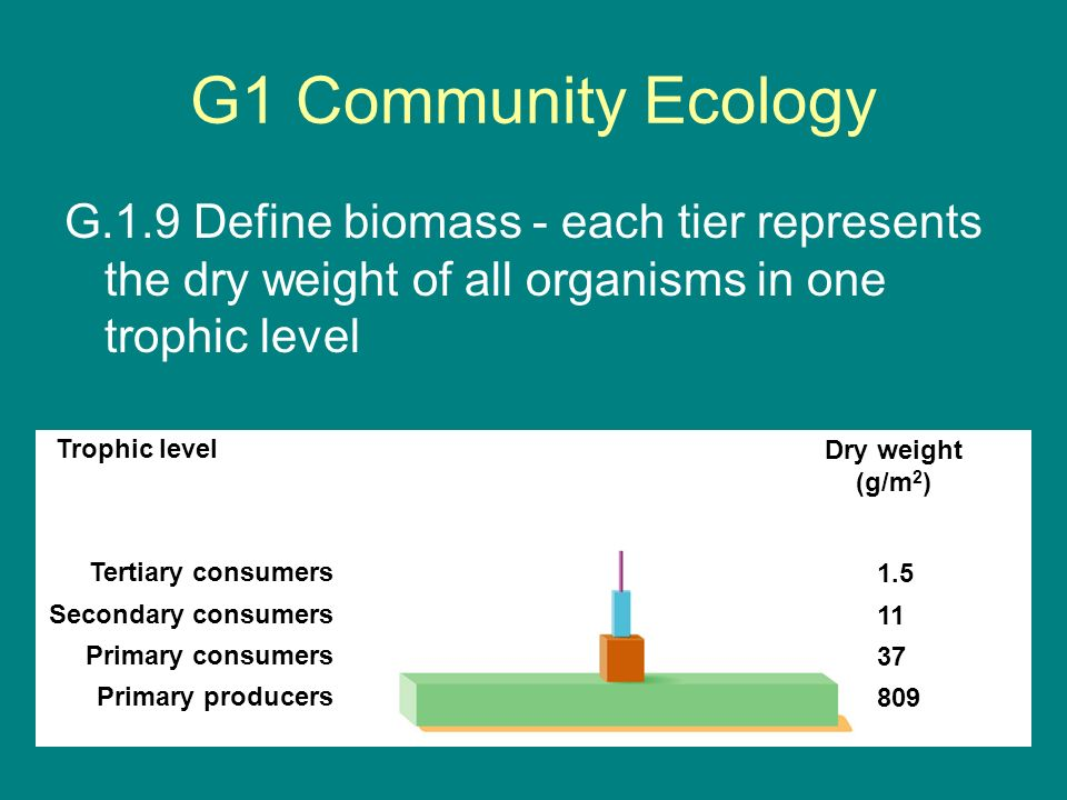 G1 Community Ecology G.1.9 Define biomass - each tier represents the dry weight of all organisms in one trophic level.
