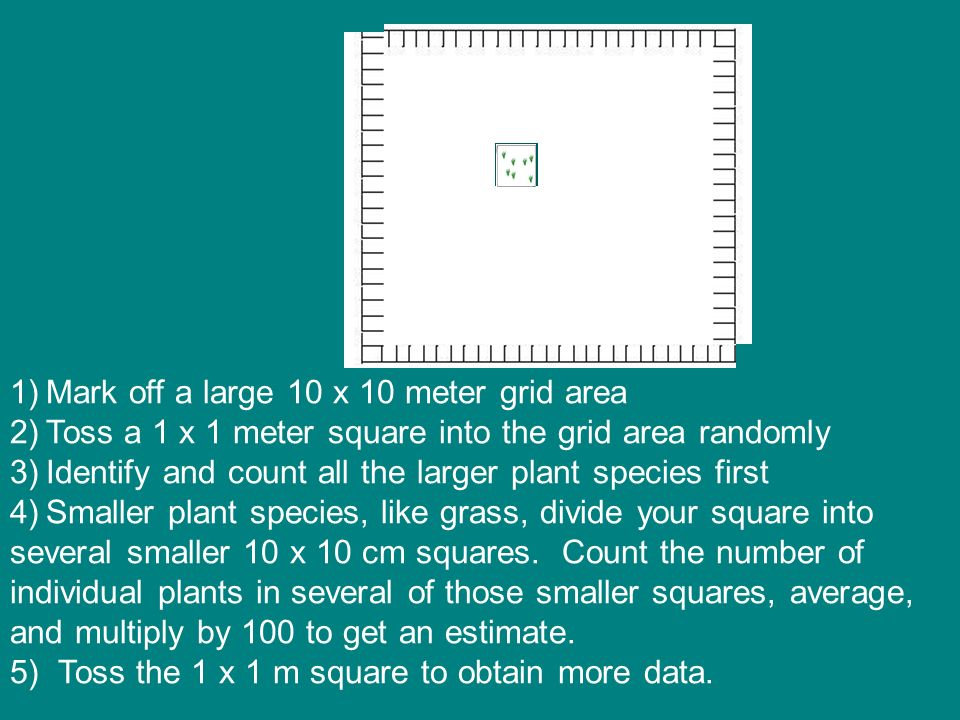 Mark off a large 10 x 10 meter grid area