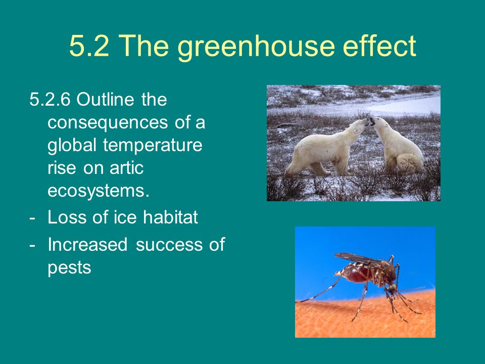 5.2 The greenhouse effect 5.2.6 Outline the consequences of a global temperature rise on artic ecosystems.