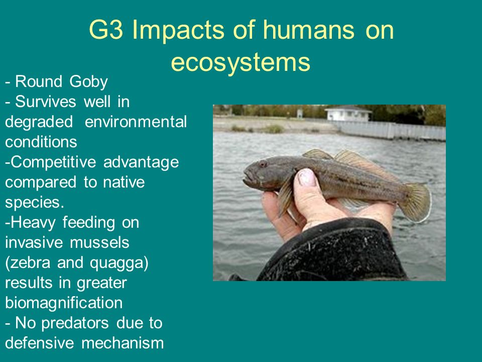 G3 Impacts of humans on ecosystems