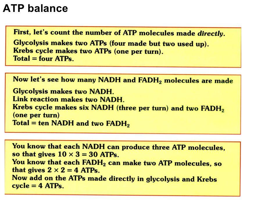 ATP balance