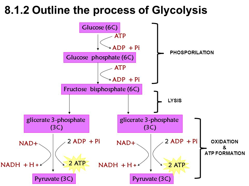 8.1.2 Outline the process of Glycolysis