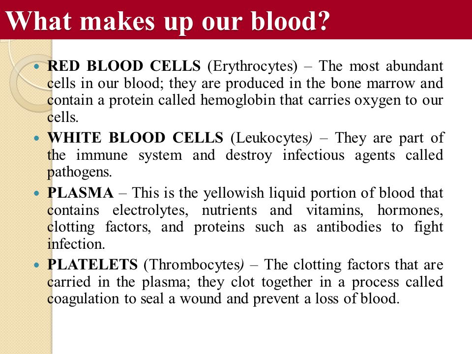 What makes up our blood